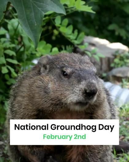 National Groundhog Day