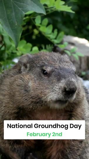 National Groundhog Day