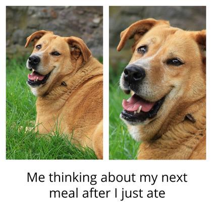 Just Ate Meme