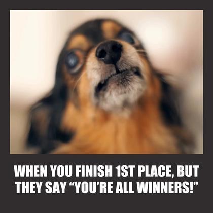 All Winners Meme