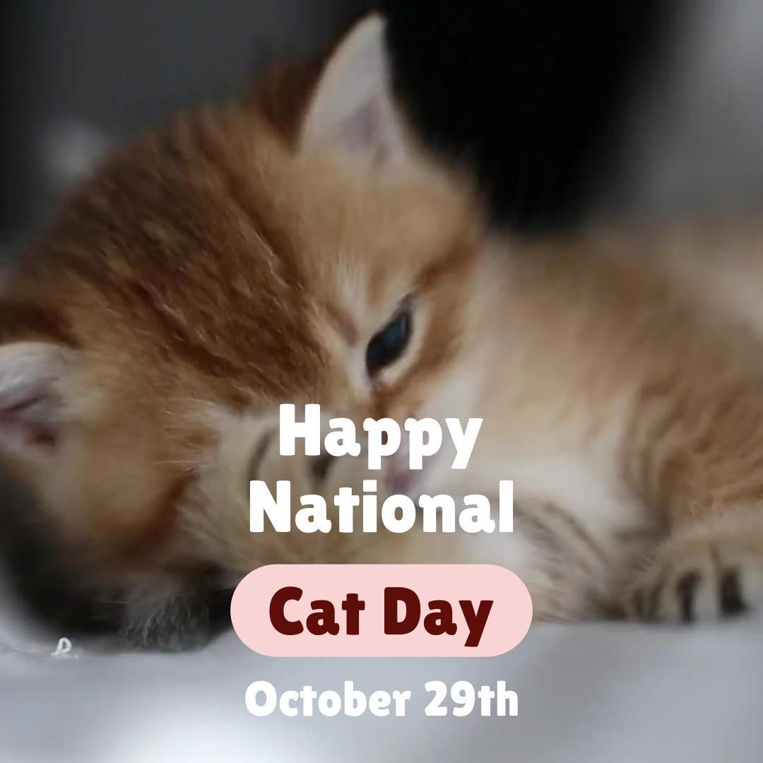 National Cat Day Free Social Calendar