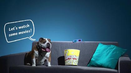 Dog Movie Lover