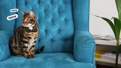 Cat in the Interior