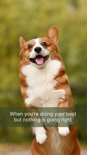 Doing Your Best Meme