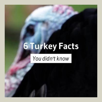 6 Turkey Facts