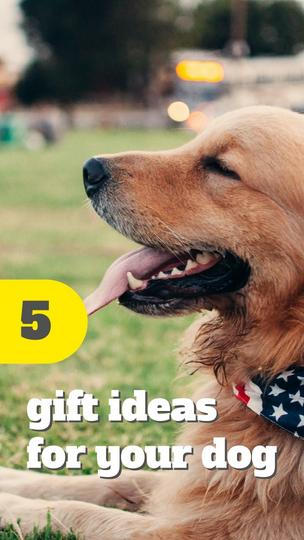 Gift Ideas for Your Dog