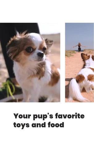 Pet Shop Offer
