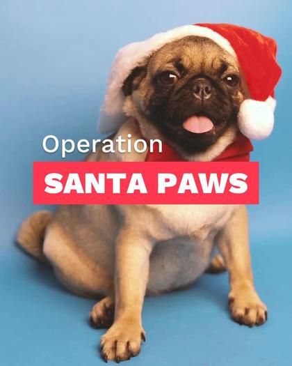 Operation Santa Paws Month